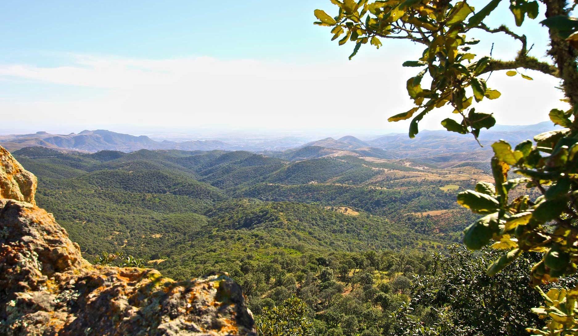 vista de la zona de Las Palomas